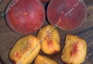 Peach – Garden Lady