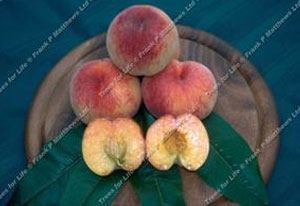 Peach – Rochester