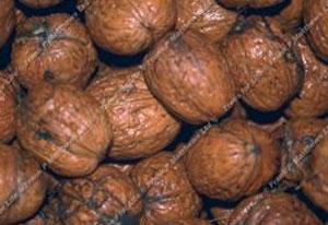 Walnut – Buccaneer (12l)